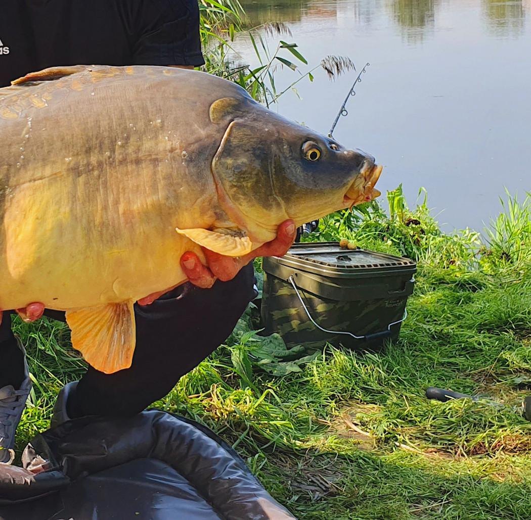 Karpfenangeln am Fluss – Mit Boilie und Festblei auf schwimmende Kraftpakete angeln!